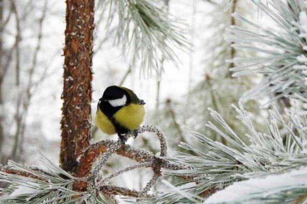 Какой будет зима 2018-2019? Предварительный прогноз погоды по месяцам