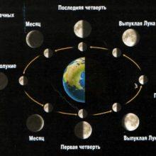 Лунный посевной календарь садоводов и огородников для Сибири на 2020 год, благоприятные дни, Дачный участок