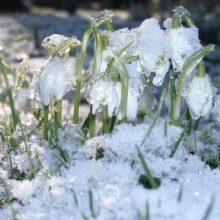 Погода на февраль-март 2019 года в России, прогноз от синоптиков