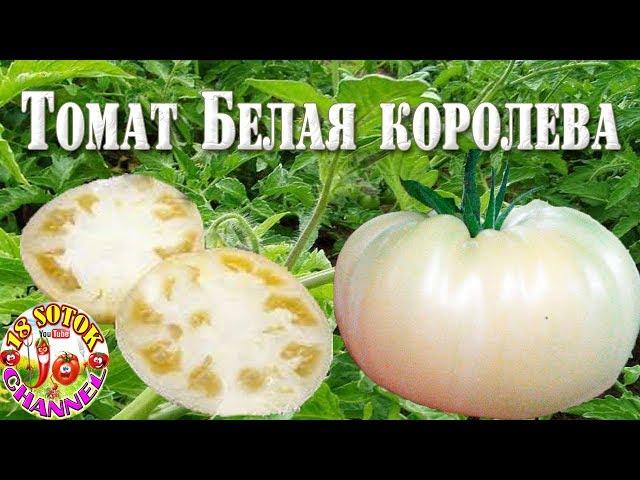 Лучшие сорта помидоров 2020: отзывы, фото и описание для открытого грунта и теплицы