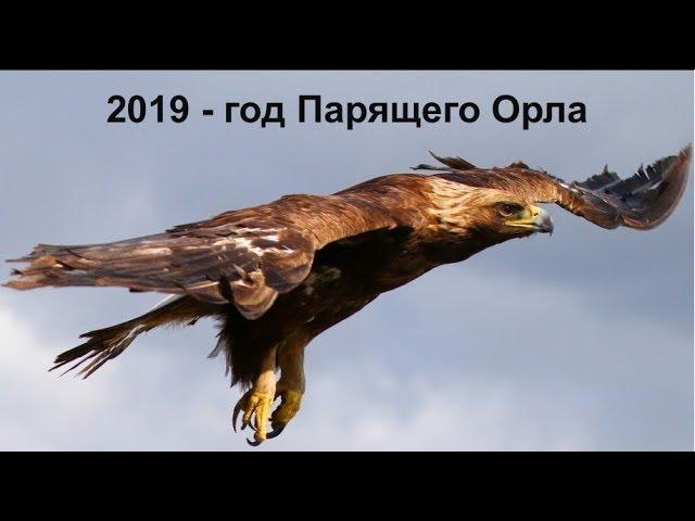 Славянский гороскоп на 2020 год (Ольга Сангалова)